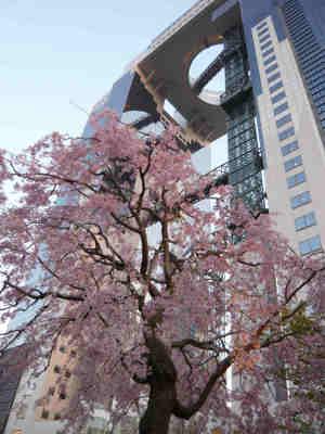 Sakura_and_sky_bld