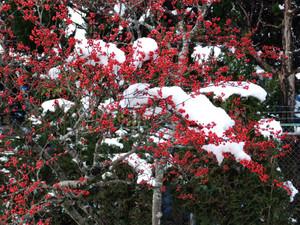 Nanten_snow