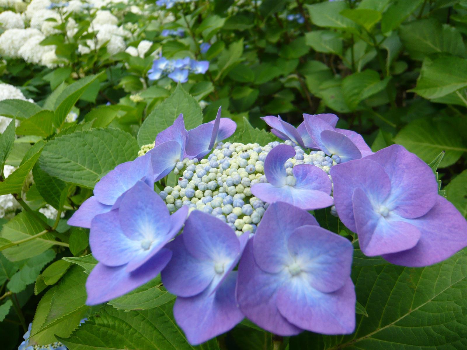 Blue_gaku