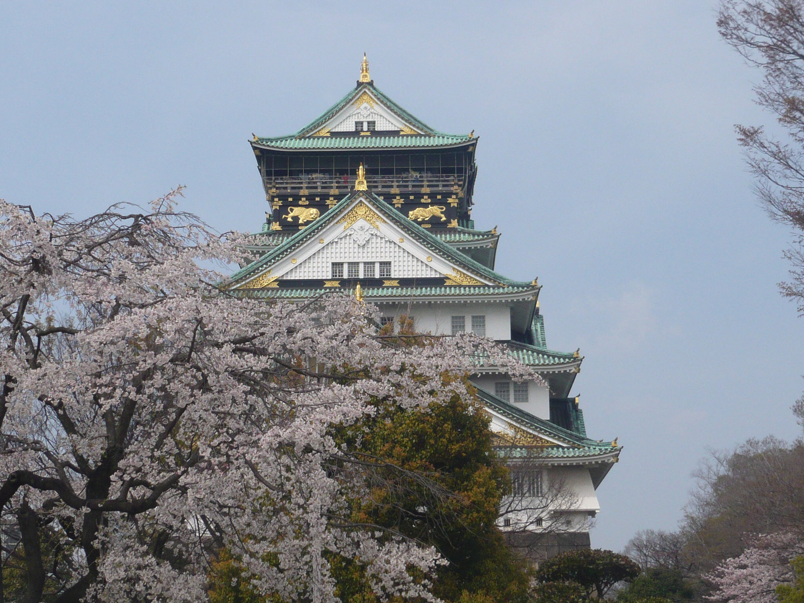 Osakajo_and_cherry_blossoms