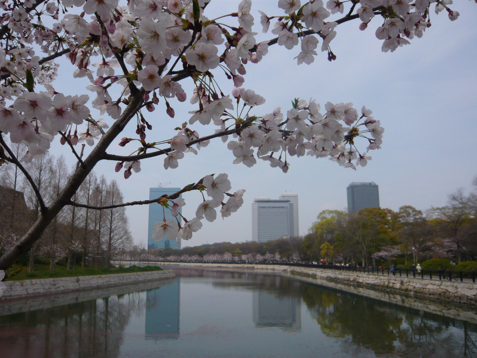 River_and_cherry_blossoms
