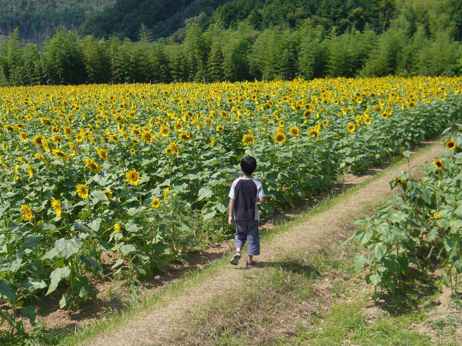 Boy_in_summer