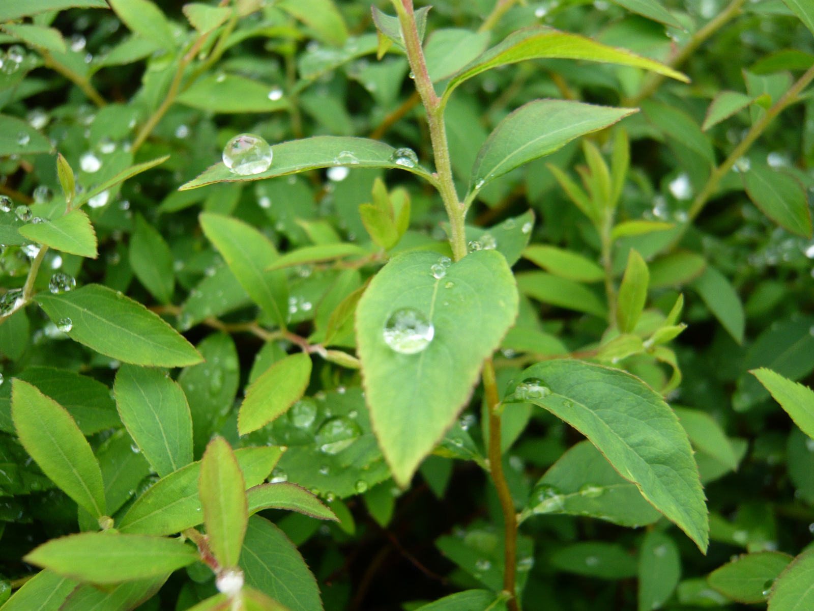 Rain_drops2