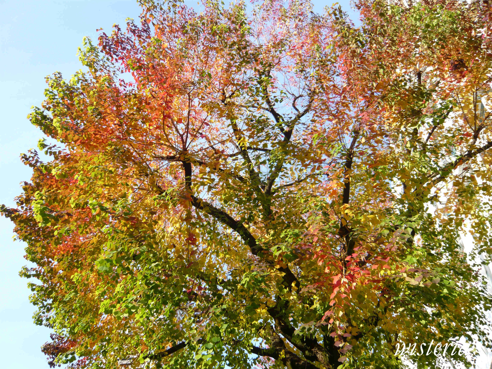 Colored_leaves