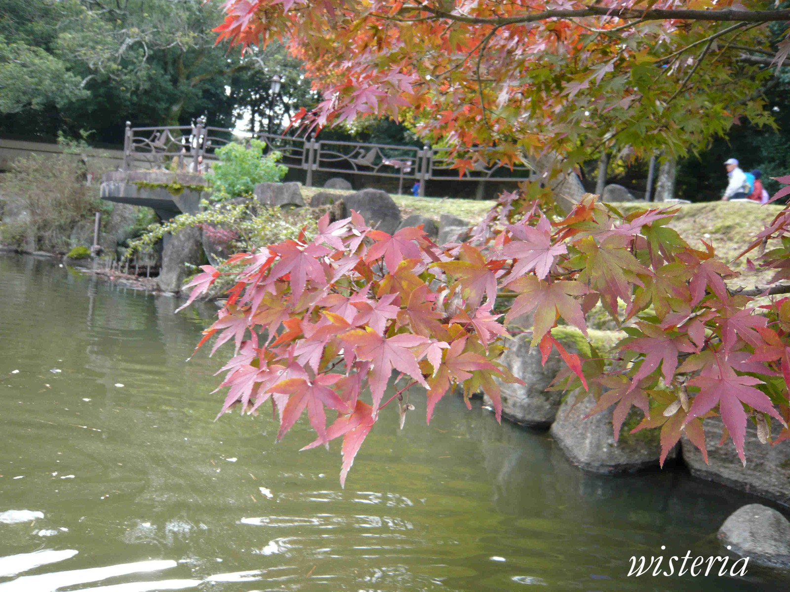 Pond_3