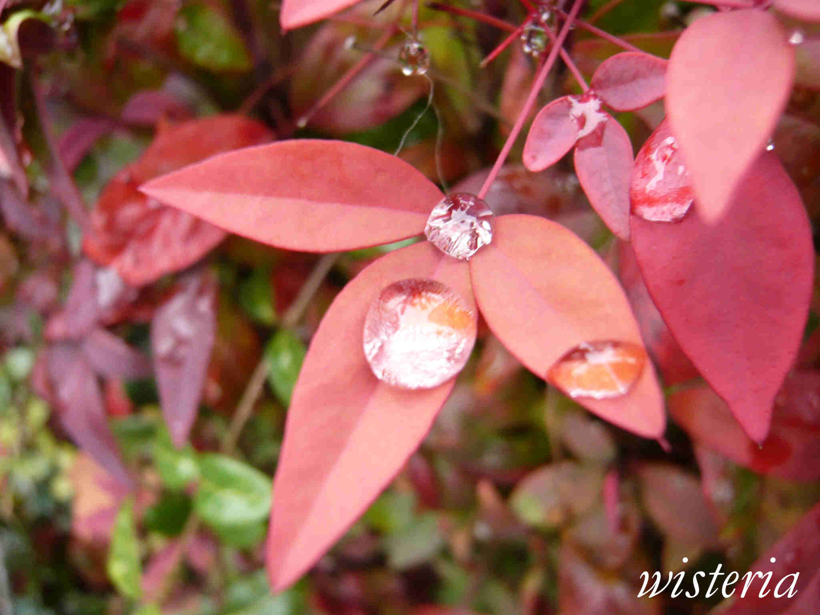 Rain_drop